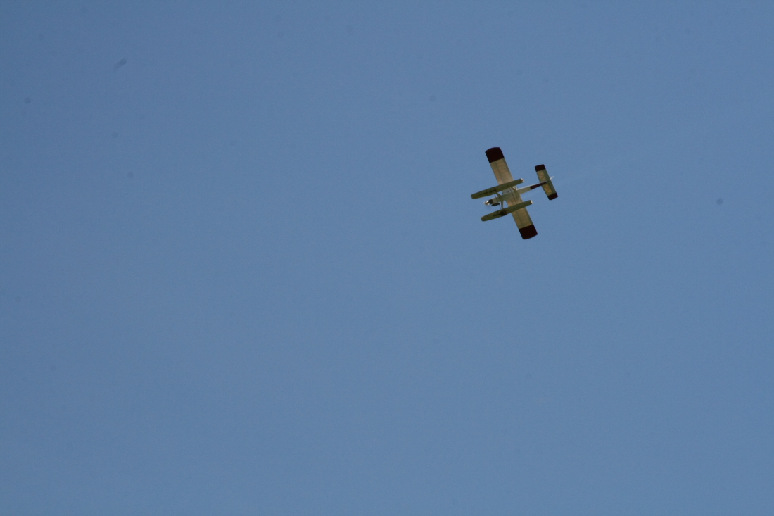 float-fly-20090078