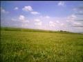 Field1Jun2008pic4